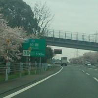 2017年4月18日オレだけの花見!?