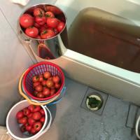 トマト来た〜〜♪♪トマトケチャップ作るよ!