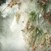 関東を襲う「殺人花粉」!!