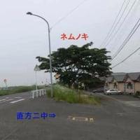 ◎田川市でネムノキを見つけました。