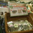 7月19日地産マルシェでめずらしい野菜買いました