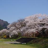 那須塩原市 塩原の桜 29.4.24