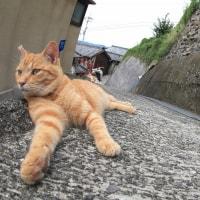 瀬戸内A島の猫たち 2016年 10月 その10