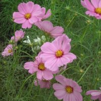『河川環境楽園の花々』