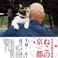 ねこの京都写真展