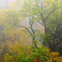 11月24日(木)の聖言