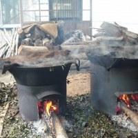 特産の番茶作りが始まりました。