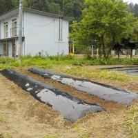 雨の前に一気に畝を作りマルチを張って・・・・。