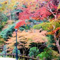 箕面滝道~西江寺~政の茶屋園地