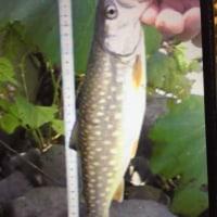 札幌時代の釣り