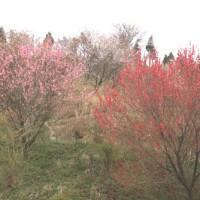 花野を行くー春の山旅ー