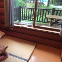 美杉リゾート  ペットと泊まれるコテージ