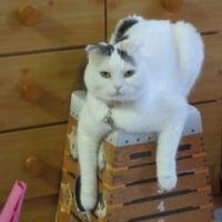 ピュアとツーニャンズの近況で~すo(=ёェё=)o ミャー♪