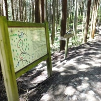 ツツジ満開の大和葛城山を歩く 2017年5月18日 その1