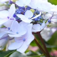 per's garden  2016.09.22