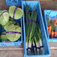 野菜の出荷準備 と 頂き物の鰺 !