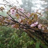 雨の黒姫山
