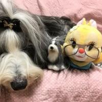 ミア賞(年賀状コンテスト)