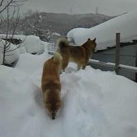 曇りのち雪