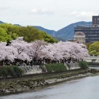 過去の写真~桜(広島市)