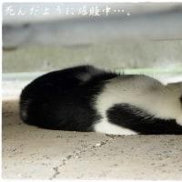 我が家のニャン歴史 ~メス猫が飼いたいのに~①