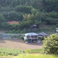 篠窪(しのくぼ)より 五月雨に向けて霞む富士山はステキ