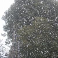 雪が降っています・・・