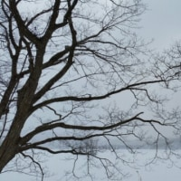 雪ない景色