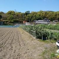 太陽光発電パネルの組み立て作業。大川のヤギ小屋広場の草刈り。大川のヤギ達。ふるさと納税・・・?。
