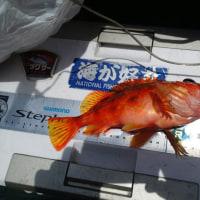 タチ&アジ 東京湾リレー釣行記