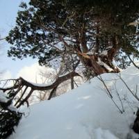 雪の高原散歩・檜倉