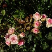 2016秋 バラと千の花々 4