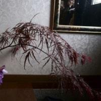 花盛り102
