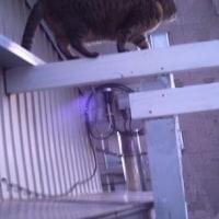 ネコは高い所が好きですよね。