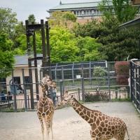 京の動物園