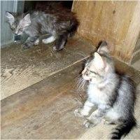 キジトラの2匹は里親が見つかりました