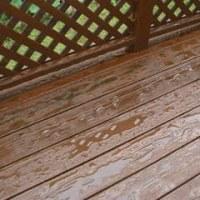 雨が降ったので塗装の成果を確認