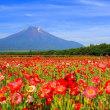 花の都公園に咲いてる赤が鮮やかなポピー