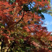 基山の大興善寺の紅葉p3(D5500、18-140mm)