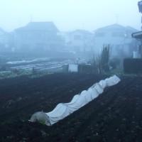 12月5日(月)  霧の朝