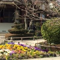 春彼岸のお墓まいりは花粉との戦い