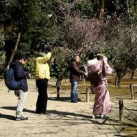 縮景園の梅 3(広島)