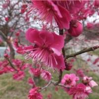 春が来た・・・春が来た.(^^♪