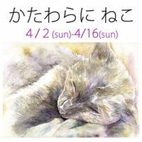 猫原 クロ かたわらに ねこ 4/2-4/16