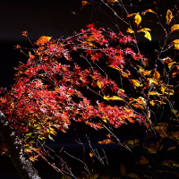 富士見町 白林荘の秋2016