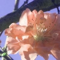 奇跡のような可視光線たる花かのよう