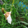 トウモロコシ2017 涙の攻防戦