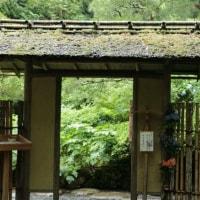 雨の紫陽花 鎌倉明月院