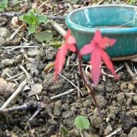 ミニ盆栽とプールの小皿