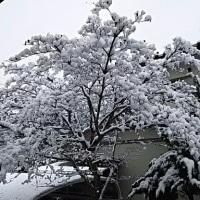 千葉市は雪国でした